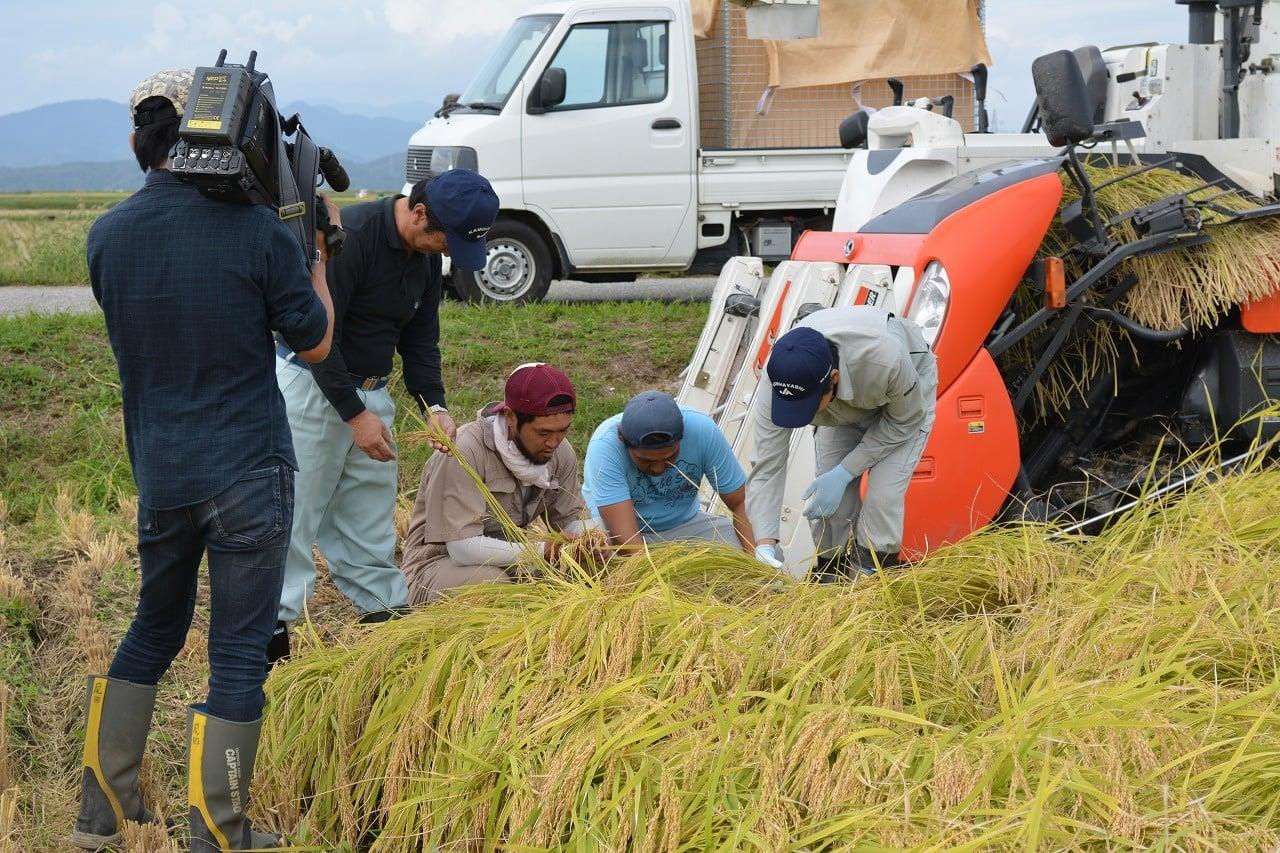 わくわく米取材の様子